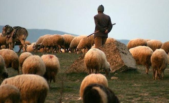 Çobanın Ziyafeti