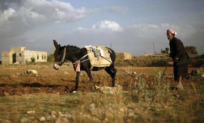 Yemen'deki Husiler: Tarım sektöründeki zarar 20 milyar dolardan fazla!