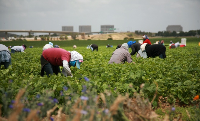 Tarım işçilerine koronavirüs tedbiri