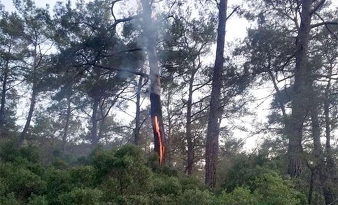 Muğla'da 12 günde 48 yıldırım yangını!