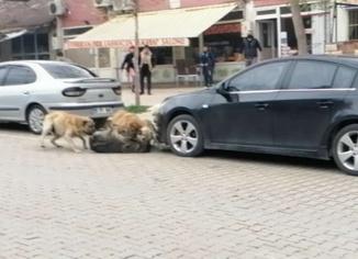 Sokak köpekleri çarşı ortasında öğrencilere saldırdı
