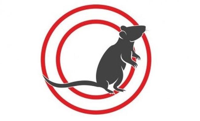 Avustralya'da farelerin istila ettiği cezaevi tahliye edildi