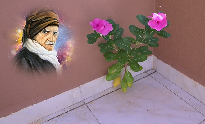 """Beton duvarda açan linda çiçeği ve Üstad'ın """"sözler""""inin hatıra getirdikleri"""