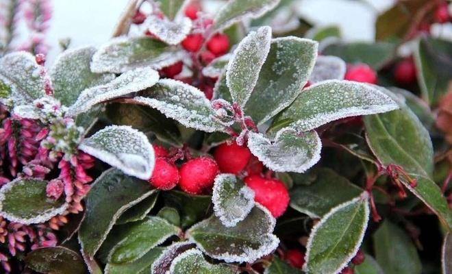 Meteoroloji'den 4 il için zirai don uyarısı