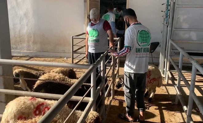Cizre Umut Kervanı 910 aileye kurbanlık et ulaştırdı