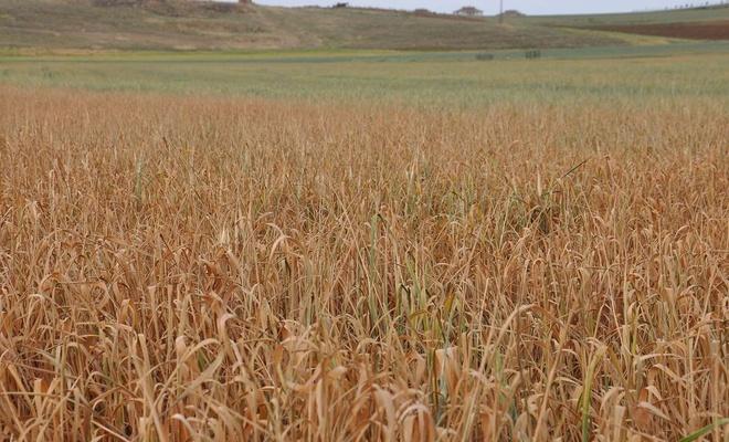 Çiftçilere 'kuraklık desteği' verilmesi talebi