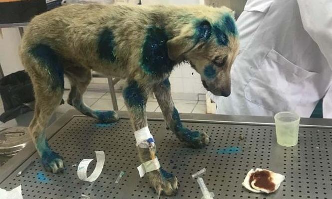 Diyarbakır`da yavru köpeğe işkence