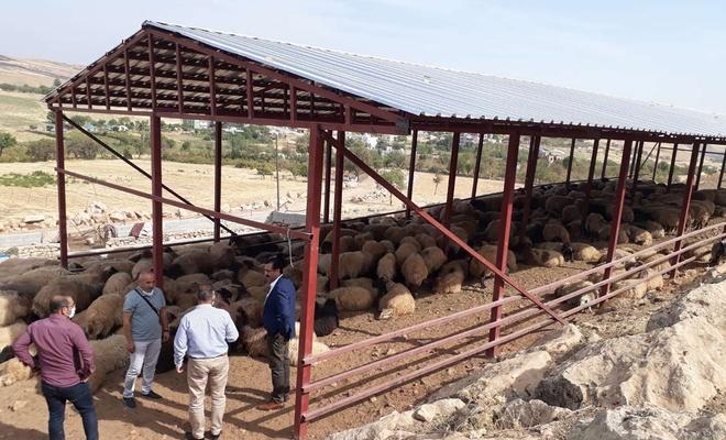 Siirt Tarım ve Orman Müdürlüğü meralarda yapılan yatırımlar incelendi