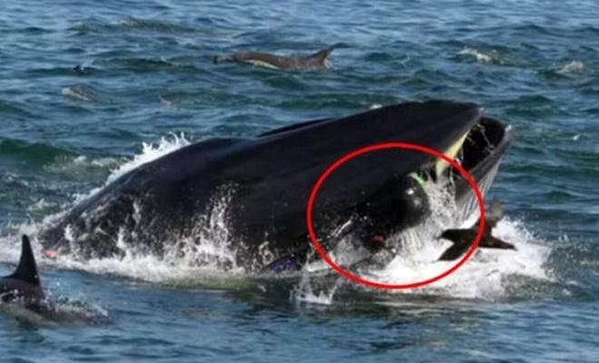 Balıkçı 40 saniye balinanın ağzında kaldı sonra...