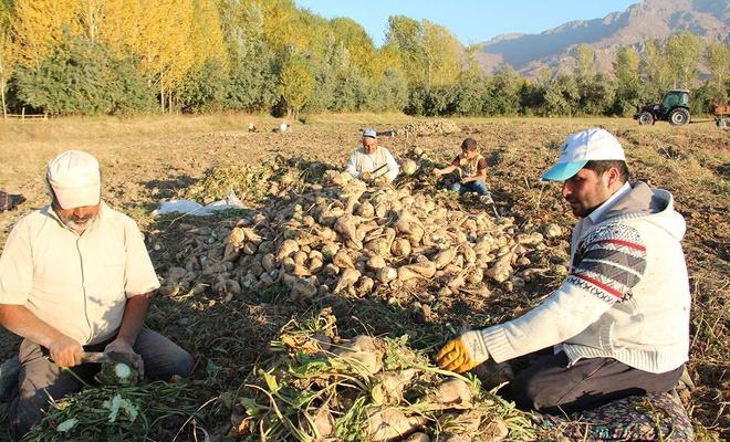 Şeker pancarı üreticisi, üretime devam edebilmek için destek bekliyor