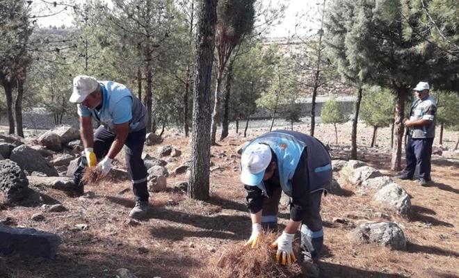 Viranşehir'de yangınlara karşı orman temizliği yapılıyor