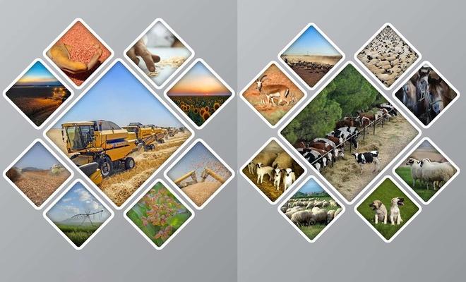 Tarım ve hayvancılığın merkezi: TİGEM