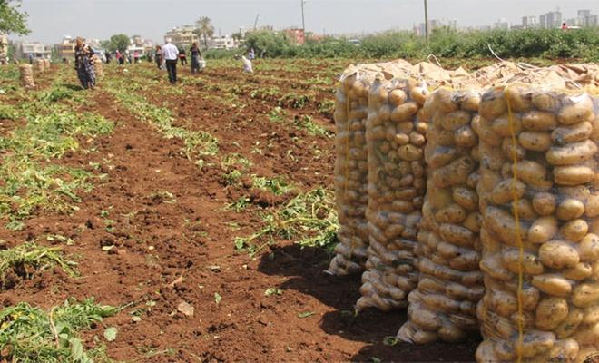Patates Araştırma Enstitüsü Müdürlüğünden tohumluk üretim hakkı satış ihalesi