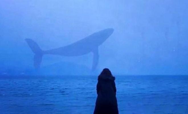 TBMM raporu: 150 gencin intiharında 'mavi balina' şüphesi var