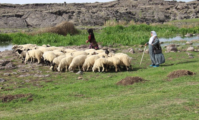 Ramazan ayında çoban olmak