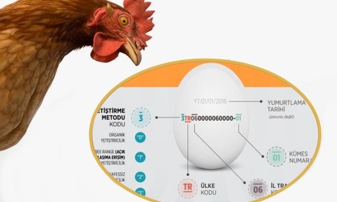 Yumurtacılar kod uygulamasından memnun