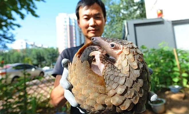 Çin'de vahşi hayvan tüketimine ceza geliyor.