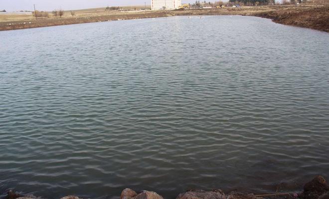 Diyarbakır'da 'hayvan içme suyu göletleri' oluşturuluyor