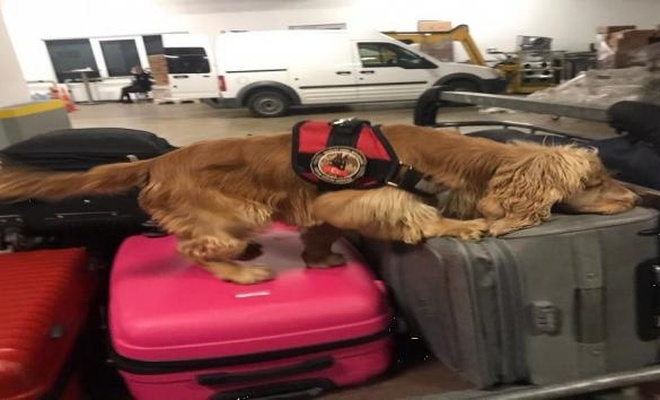Havalimanında yolcunun üzerinden uyuşturucu çıktı