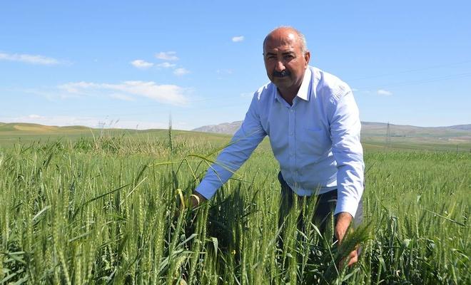 Güneş paneliyle ekinlerini kuraklıktan korudu
