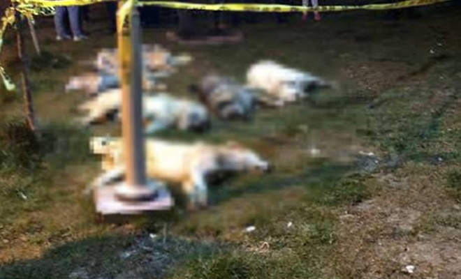 Ankara'da sokak köpeklerini öldürenlere 10'ar yıl hapis