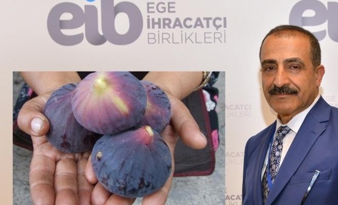 Taze siyah incir ihracatı havadan olacak