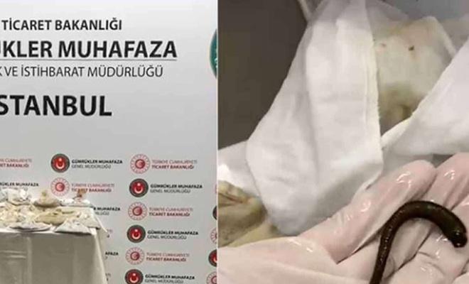 Sabiha Gökçen Havalimanında binlerce sülük ele geçirildi