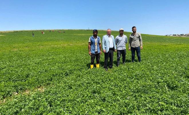 Viranşehir'de alternatif tarım ürünleri artıyor