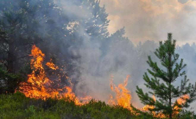 Manisa'nın Soma ilçesindeki ormanlık alanda yangın çıktı