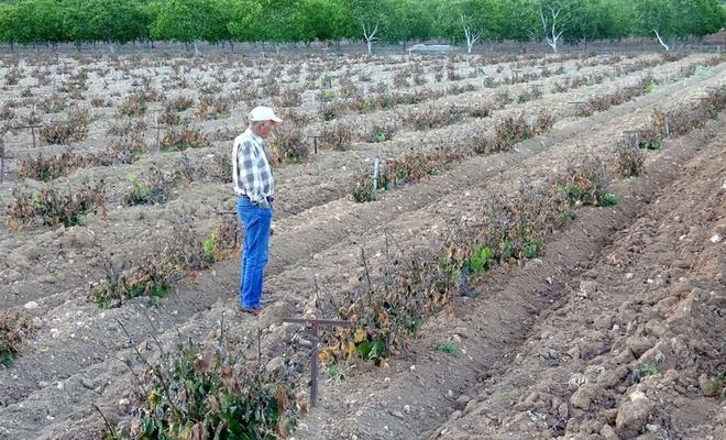Sıcaklık ani düştü, meyve bahçeleri zarar gördü