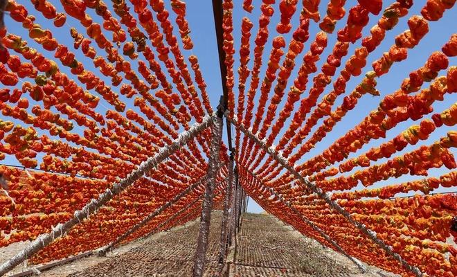 Gaziantep'te hazırlanan kurutmalık sebzeler dünyaya ihraç ediliyor