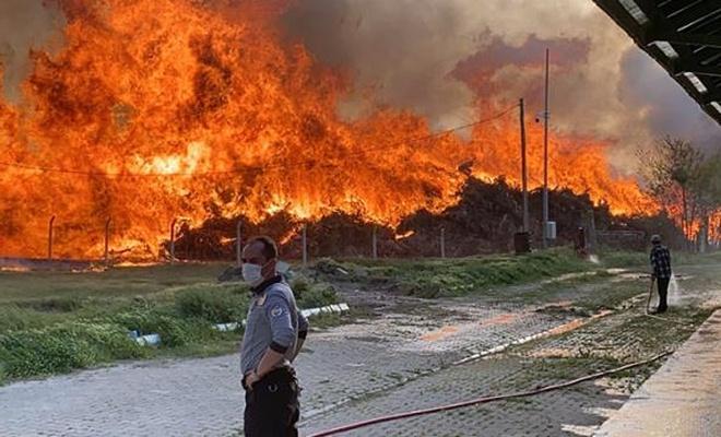 Biyoenerji tesisinde büyük yangın