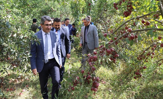Ağrı'da Elma Hasadı etkinliği düzenlendi