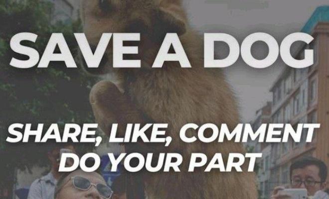 """""""Save a Dog"""" kampanyası masum değil mi?"""