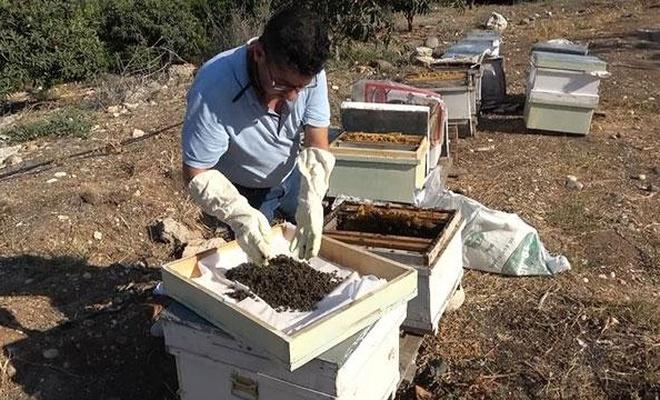 1 milyon 200 bin arı telef oldu!