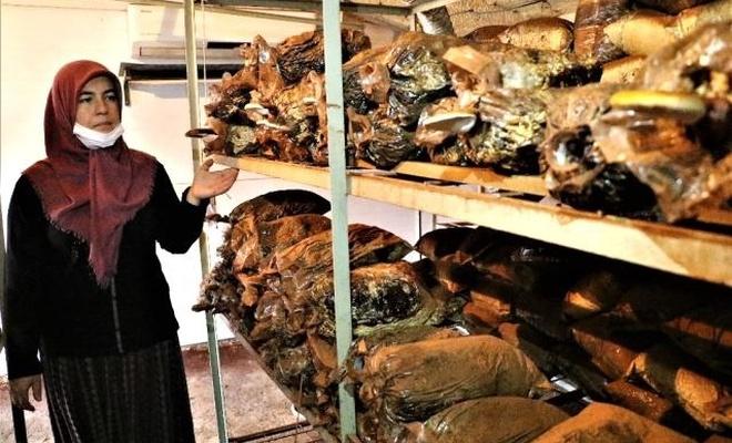 Bu ölümsüzlük mantarının kilosu 3 bin TL