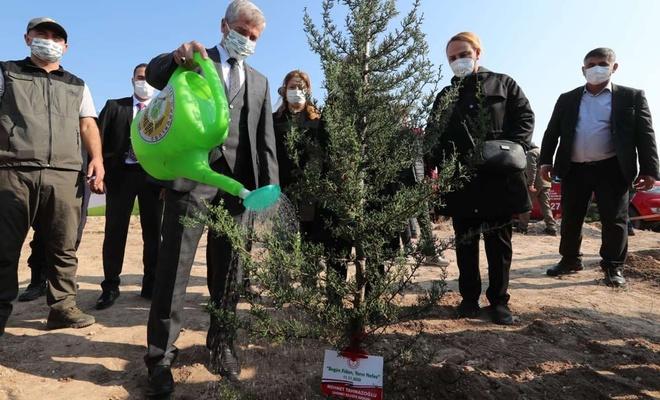 Gaziantep'te belediyelerden yanan ormanlar için 97 bin fidan bağışı