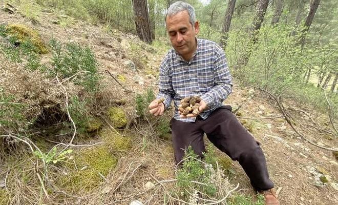 Yerini bilen toplamaya koşuyor: Bu mantarın kilosu 2 bin lira