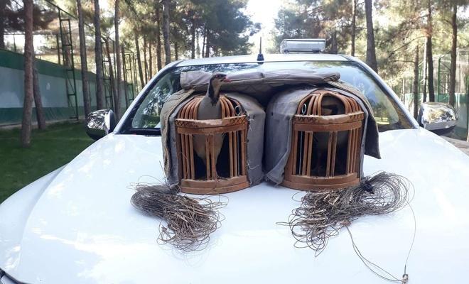Şanlıurfa'da kaçak kınalı keklik avlayan avcı yakalandı