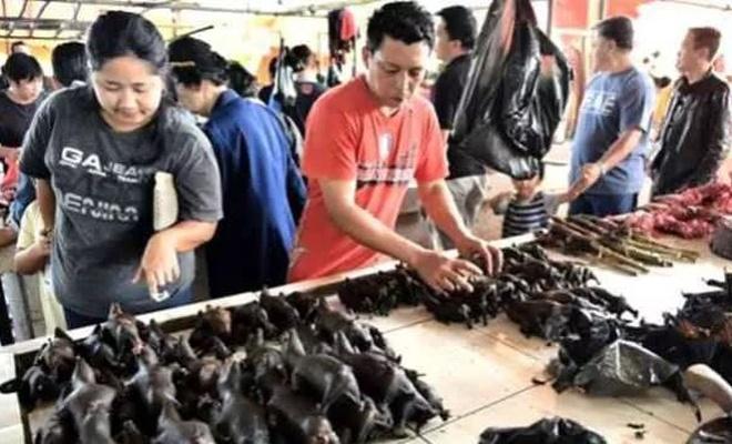 Balık pazarını unutun Koronavirüsün ilk çıkışı çok daha eskiye dayanıyor