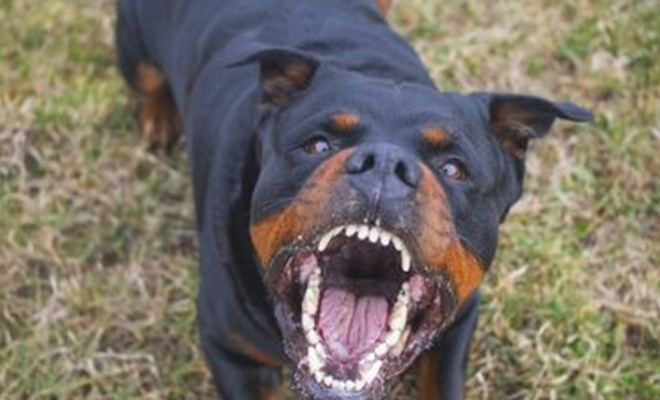 Evin köpeği 1 günlük bebeği öldürdü