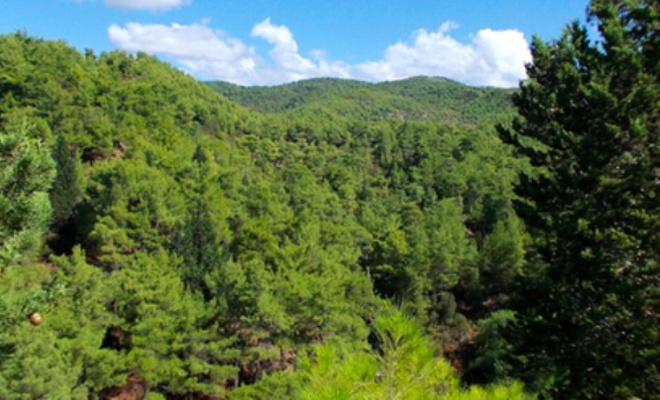 Ormana giriş yasağı alınan iller