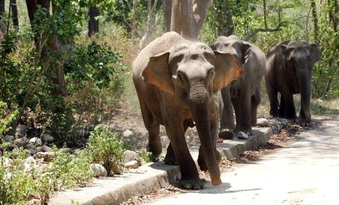Evinde uyuyan kadın, fil saldırısında hayatını kaybetti