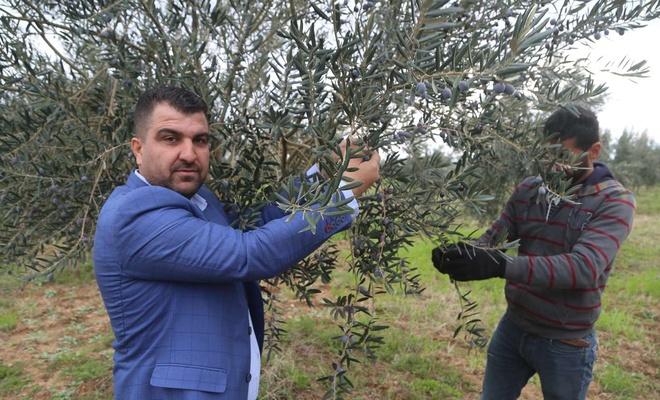 Zeytin bahçesiyle istihdam sağlayan örnek çiftçi kendi markasıyla zeytinyağı üretiyor