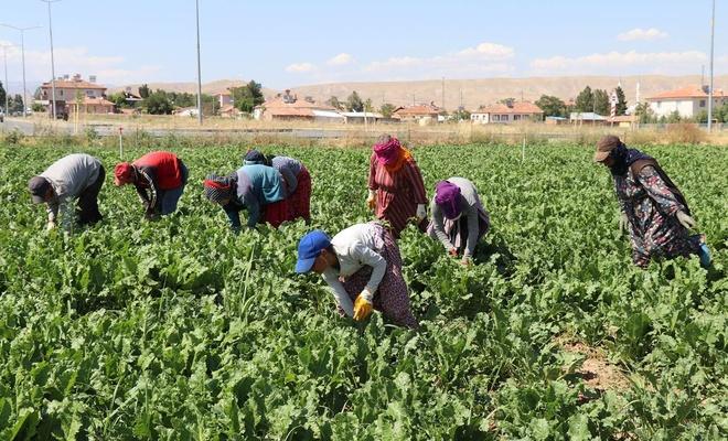 Mevsimlik tarım işçileri insanca bir yaşam istiyor