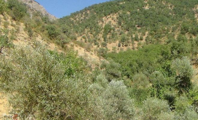 Antalya'da ormanlık alanlarına girişler yasaklandı