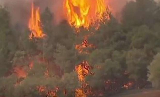 """Kaliforniya'da """"yangın sezonu""""nda milyonlarca hektar orman yok oldu"""