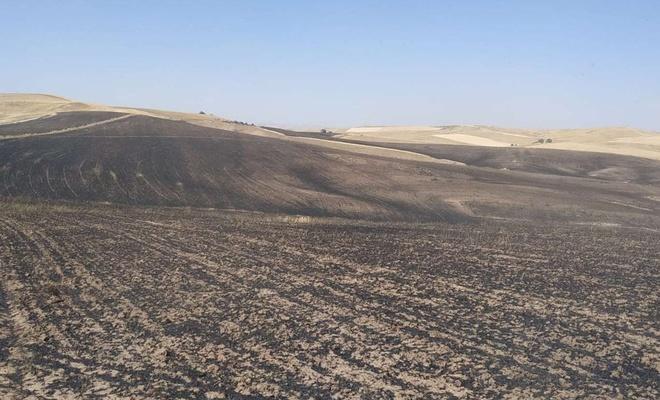Çıkan yangında 200 dönüm buğday tarlası yandı