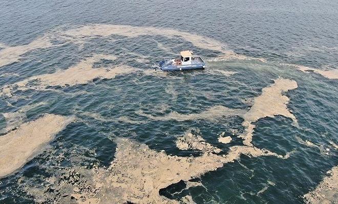 Deniz salyası sahili böyle kapladı