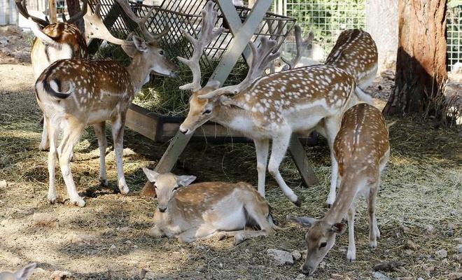 Hayvanat bahçesinden geyik kaçırıp yemişler!